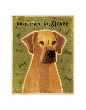 Rhodesian Ridgeback by John Golden