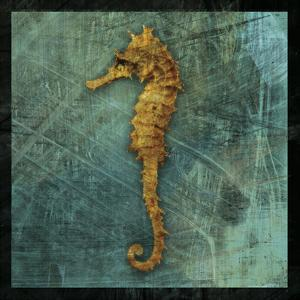 Seahorse by John Golden