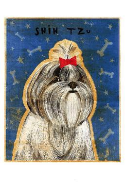 Shih Tzu by John Golden