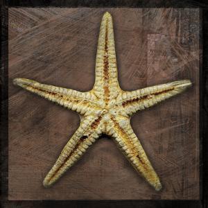 Starfish by John Golden