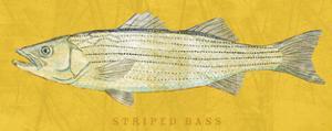 Striped Bass by John Golden