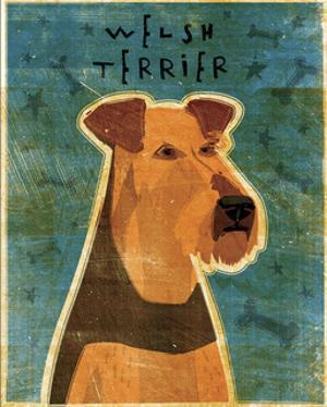 Welsh Terrier by John Golden