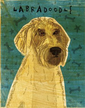 Yellow Labradoodle by John Golden