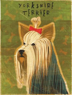 Yorkshire Terrier by John Golden