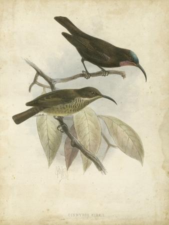 Antique Gould Hummingbird I