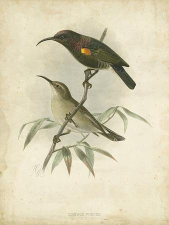 Antique Gould Hummingbird II