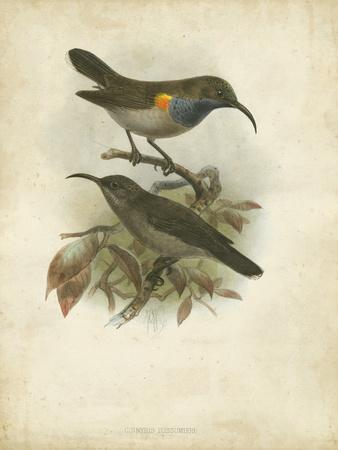 Antique Gould Hummingbird III