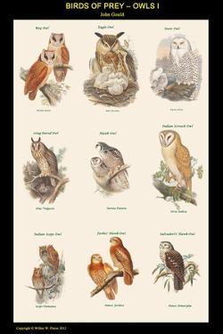 Birds of Prey - Owls - I by John Gould