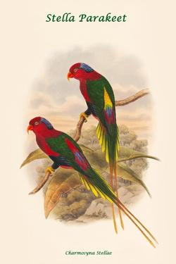 Charmosyna Stellae - Stella Parakeet by John Gould