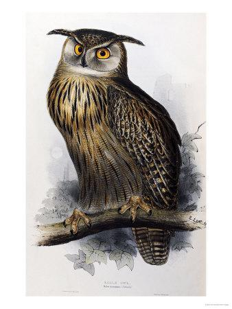 """Eagle Owl, Lithographic Plate from """"The Birds of Europe"""""""