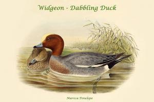 Mareca Penelope - Widgeon - Dabbling Duck by John Gould