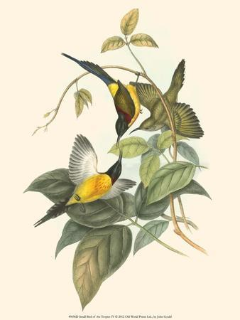 Small Bird of the Tropics IV
