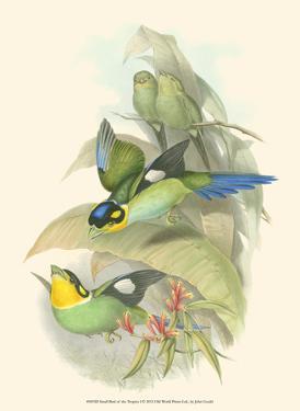 Small Birds of Tropics I by John Gould