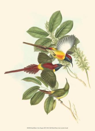 Small Birds of Tropics III