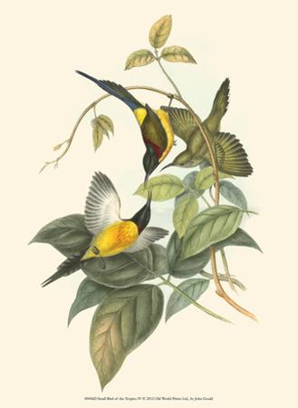 Small Birds of Tropics IV by John Gould