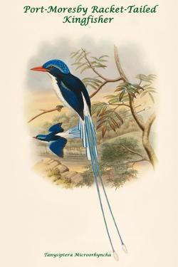 Tanysiptera Microorhyncha - Port-Moresby Racket-Tailed Kingfisher by John Gould