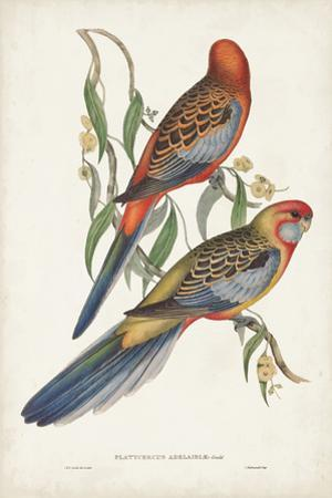 Tropical Parrots II by John Gould