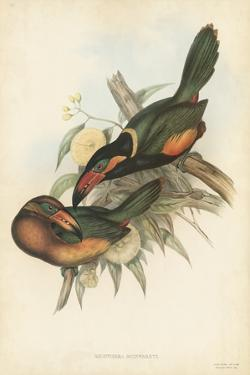 Tropical Toucans V by John Gould