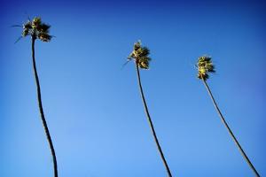 3 Palms by John Gusky