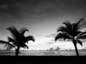 Two Palms BW by John Gusky