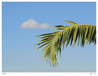Palm Cloud Islamorada