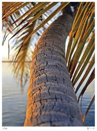 Sunset Palm Islamorada