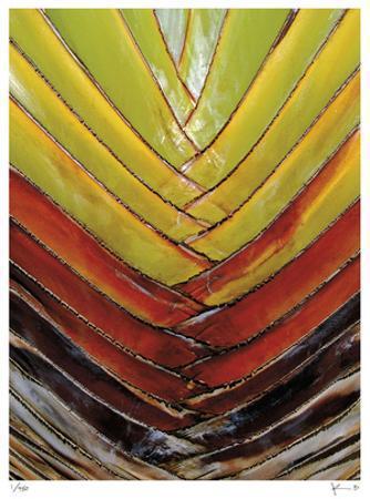 Vertical Color Palm