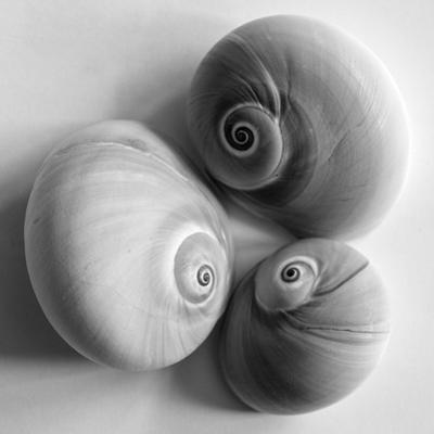 Moon Sea Shell by John Harper