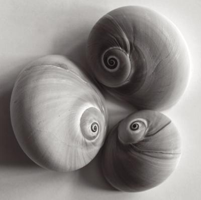Moon Sea Shell