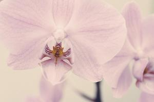 Orchid Dream by John Harper