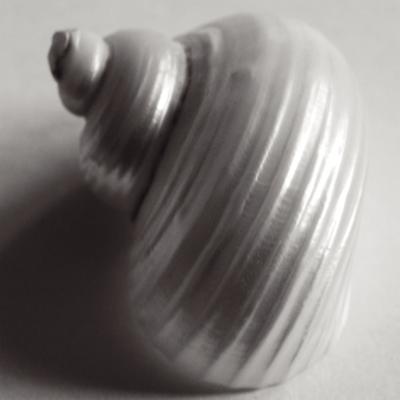 Snail Sea Shell