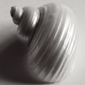 Snail Sea Shell by John Harper