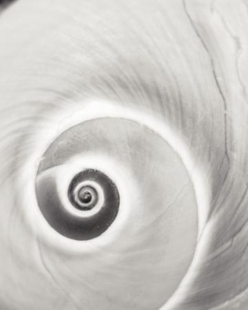 Spiral Shell by John Harper