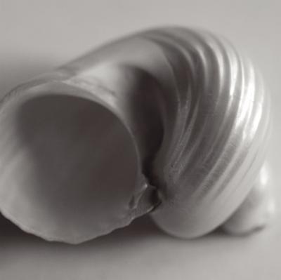 Tulip Sea Shell by John Harper