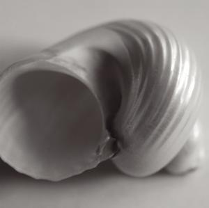 Tulip Sea Shell by John Harper