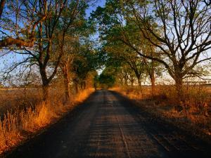 A Corrugated Dirt Road Through Farm Land in the Western District, Noorat, Victoria, Australia by John Hay