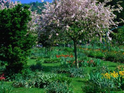 Blossom Tree at Monet's Garden Giverny, Haute-Normandy, France