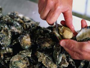 Shucking Oysters, Coffin Bay, Australia by John Hay