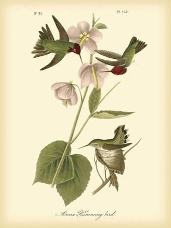 Anna Hummingbird by John James Audubon