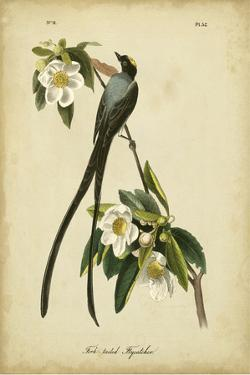 Audubon Fork-tailed Flycatcher by John James Audubon