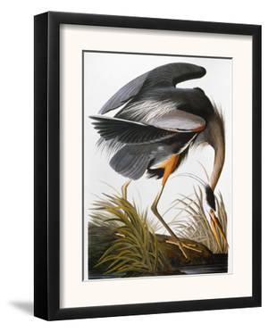 Audubon: Heron by John James Audubon