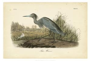 Audubon's Blue Heron by John James Audubon