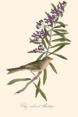 Audubon's Bunting by John James Audubon