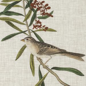 Avian Crop VII by John James Audubon