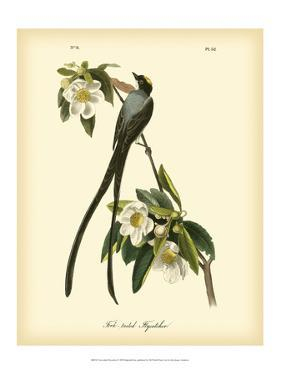 Fork-Tailed Flycatcher by John James Audubon