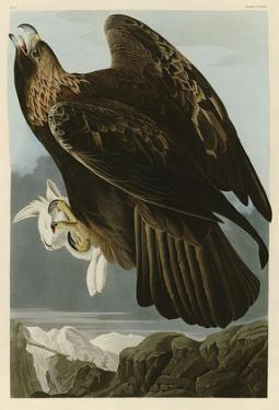 Golden Eagle by John James Audubon