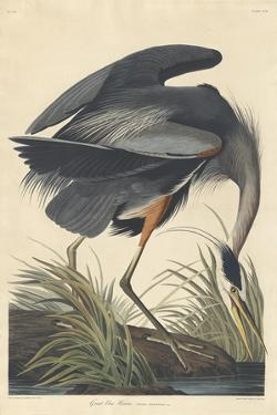 Great blue Heron, 1834 by John James Audubon
