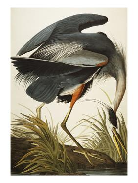 Great Blue Heron (Ardea Herodias), Plate Ccxi, from 'The Birds of America' by John James Audubon