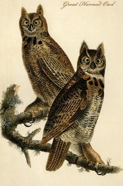 Great Horned Owl by John James Audubon