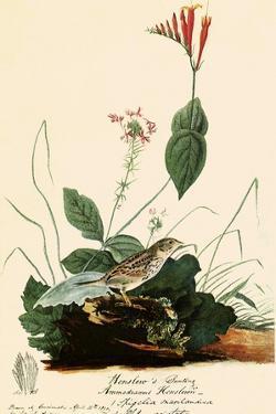 Henslow's Sparrow by John James Audubon